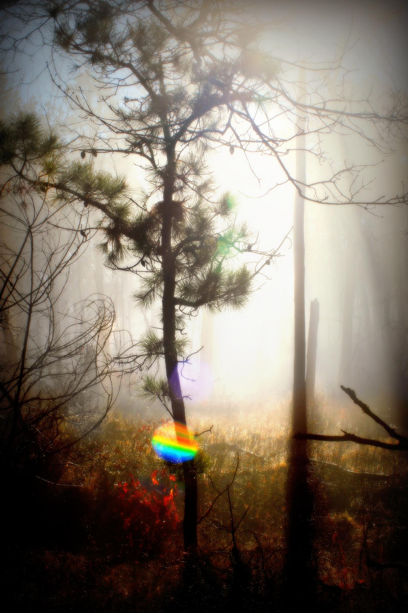【有稿來Q】拜訪森林,然後。